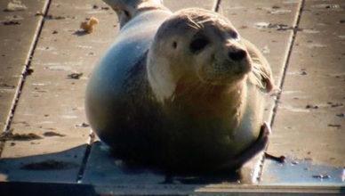 Seal at Perth Amboy Waterfront